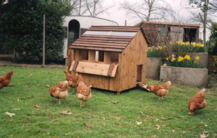 Animal Houses